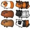 different guinea pigs